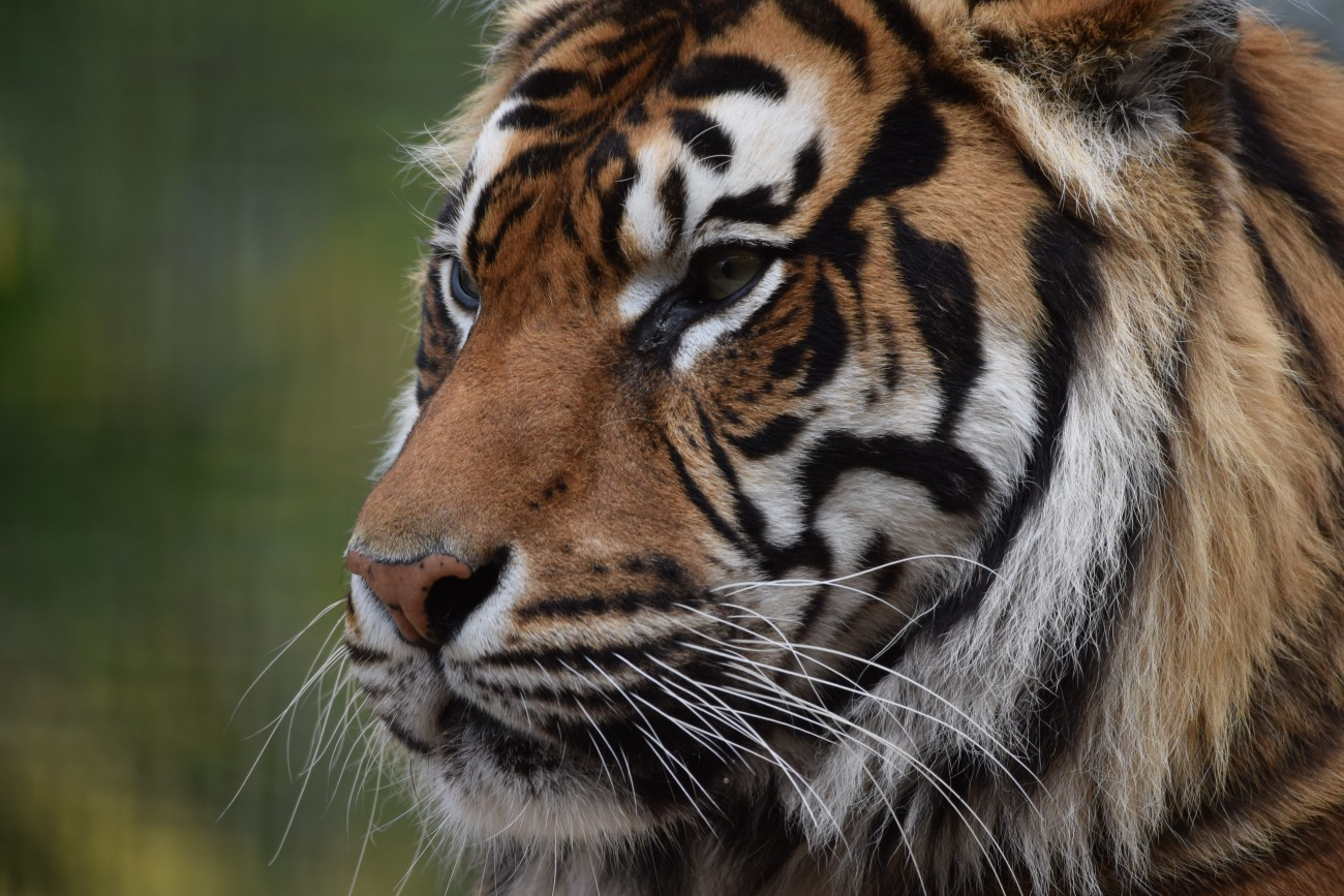 welsh mountain zoo opening times and prices